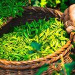 水出し緑茶を水道水で美味しく作る!水出し緑茶の注意点は?